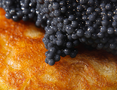 Caviar Affiliate Programs