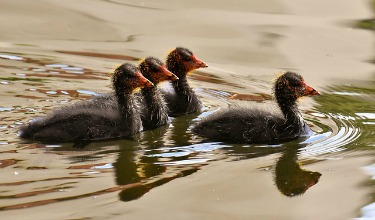 coots leadership image